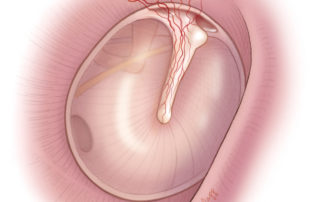 The vascular strip in the posterior-superior ear canal provides blood supply to the central portion of the tympanic membrane.